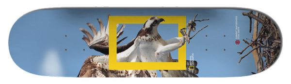 Element Team Nat Geo Osprey Skateboard Deck 8.25